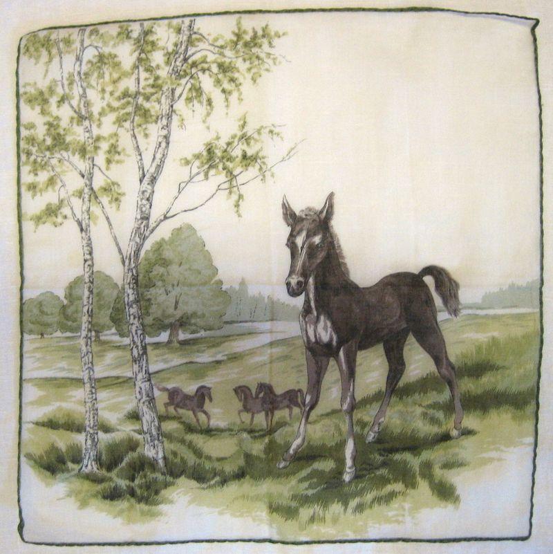 HorseColt1